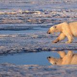 Uma Catástrofe climática causará inevitável colapso da civilização, dizem os cientistas
