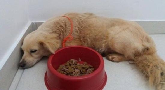 Polícia conclui inquérito sobre brasileiro que abusou sexualmente de cadela