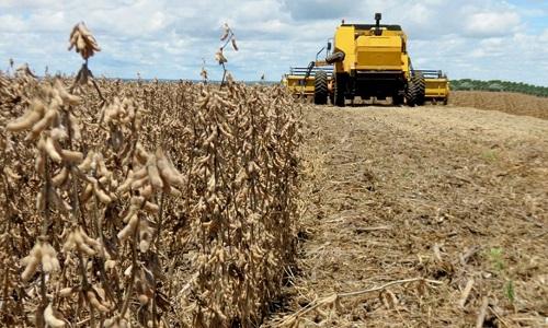 Por causa da seca o rendimento das lavouras de soja é desuniforme em MS e GO