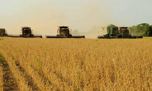 Agro Rural prevê safra de soja menor no Brasil e não descartou  mais perdas