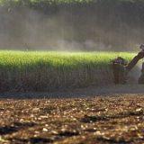 FCStone elevou a  previsão para safra de açúcar da região Centro-Sul no ano de  2019/20