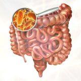 O grande poder que o nosso  intestino tem sobre a  saúde e o seu comportamento