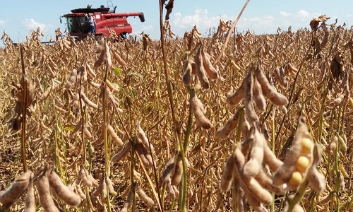 As Importação de soja dos EUA pela China quase dobrou  em janeiro