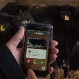 Aplicativo 'Tinder'  permite que o produtor pegue  o gado que deseja