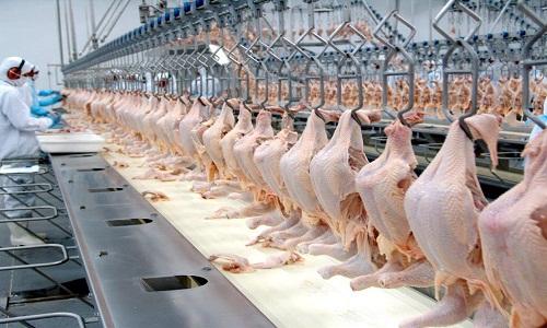 Abate de frangos bate recorde na Bahia