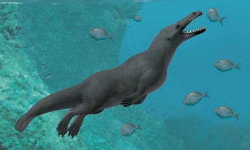 Descoberto no Peru fóssil de baleia quadrúpede