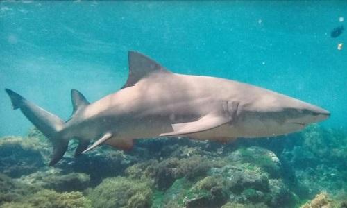 Como tubarões podem nos ajudar a combater bactérias super-resistentes.