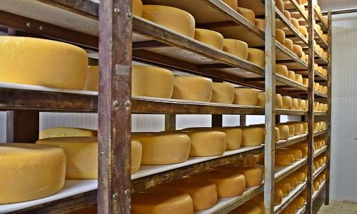 Artesanal x industrial: entenda as diferenças na produção de queijos do Sul de MG