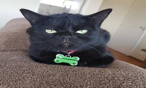 Francisquinha desponta como nova gatinha rabugenta da internet