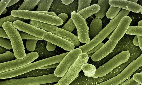 Tecnologia para identificar bactérias e reação a antibióticos em meia hora e desenvolvida por cientistas