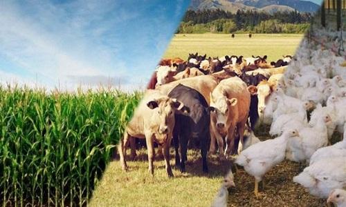 Valor da Produção Agropecuária de R$ 600 bilhões deve ser o segundo maior da história