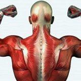 Como os anabolizantes podem prejudicar o corpo