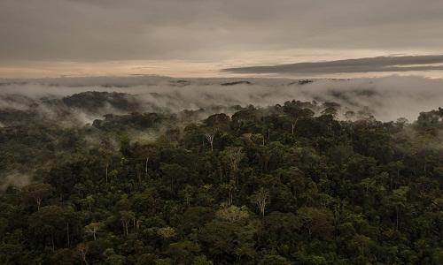 Mais de cem unidades de conservação na Amazônia estão ameaçadas, diz estudo