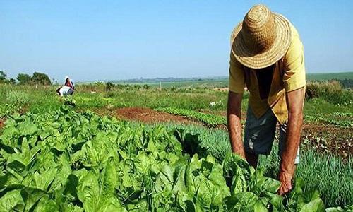 Incra cancela desapropriações de terras destinadas à reforma agrária