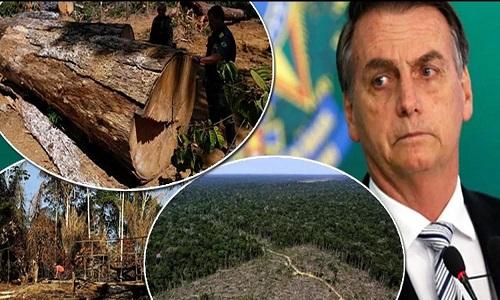 Mídia alemã já cobra sanções contra o Brasil pelo estímulo de Bolsonaro ao desmatamento