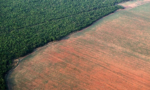 MPF abre inquérito para investigar redução das ações de combate ao desmatamento na Amazônia