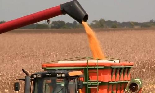 Exportação de milho do Brasil mais que dobra em 2019