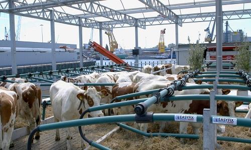 A 1ª fazenda flutuante, em operação na Holanda