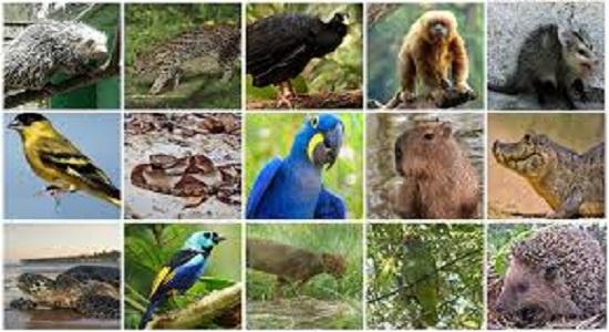 Ministério do Meio Ambiente permite criadores de animais em reunião interna do Ibama