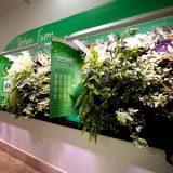 USP desenvolve kit que permite cultivar jardim em casa sem iluminação.