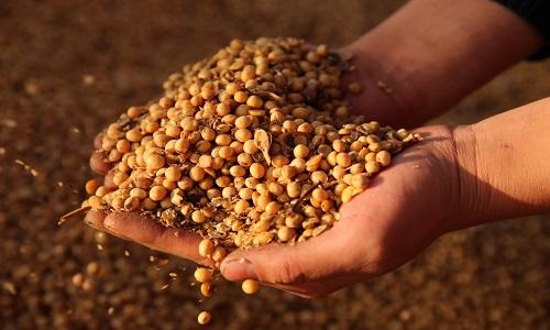 Conab vê aumento de 5% na safra de soja do Brasil e aumento de área de milho