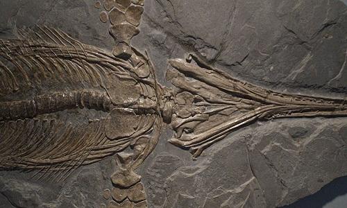 Britânico descobre fósseis de 'ictiossauro' de 65 milhões de anos