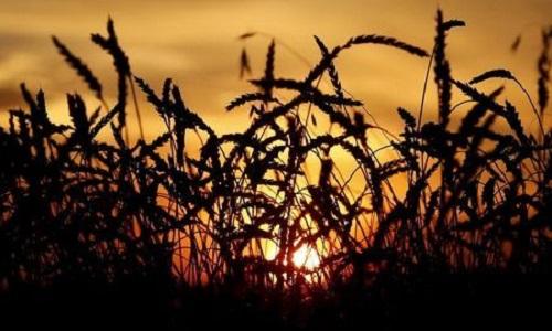 Preços de alimentos sobem no mundo com impulso de carnes e óleos vegetais, diz FAO