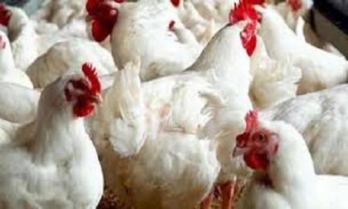 Menor movimentação no mercado de frango neste início de 2020