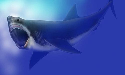 Descoberto grande dente de megalodonte, o maior tubarão que já existiu