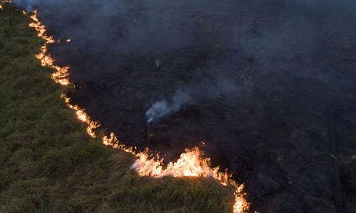 Após recorde na Amazônia, analista alerta: 'Assistiremos a desmatamento onde nunca tivemos'